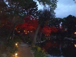 ライトアップの紅葉