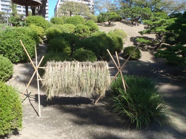 稲のハデ干し完成